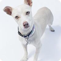 Adopt A Pet :: Laura - Santa Barbara, CA