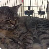 Adopt A Pet :: Marla - Byron Center, MI