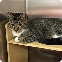 Adopt A Pet :: Monkee - Colmar, PA