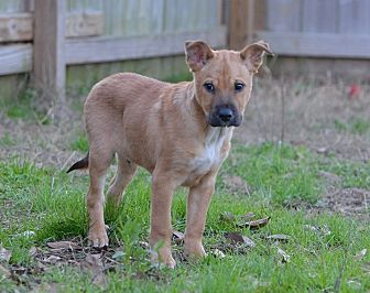 Shepherd (Unknown Type) Dog for adoption in Jackson, Mississippi - Glen Frey