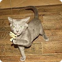 Adopt A Pet :: Leonard - Edmond, OK