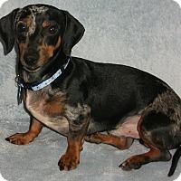 Adopt A Pet :: Willy-Pending Adoption - Omaha, NE