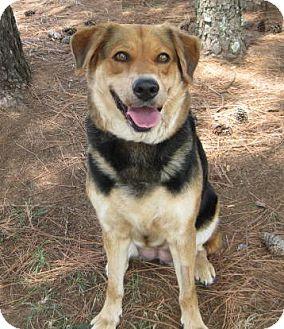 Shepherd (Unknown Type)/Labrador Retriever Mix Dog for adoption in Huntsville, Alabama - Rukie