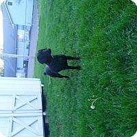 Adopt A Pet :: Shasta - Lewisville, IN
