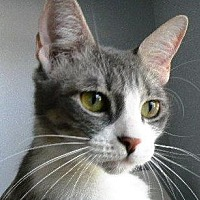 Adopt A Pet :: Isabel - Kingwood, TX