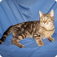 Adopt A Pet :: Donovan - Colorado Springs, CO