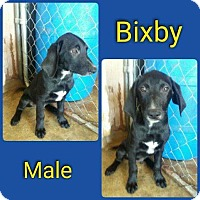 Adopt A Pet :: Bixby in CT - Manchester, CT