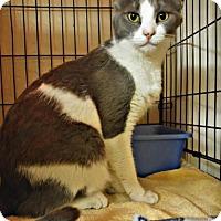 Adopt A Pet :: Olive - Tempe, AZ