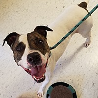 Adopt A Pet :: Hogan - House Springs, MO