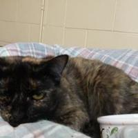 Adopt A Pet :: Audra - Erie, PA
