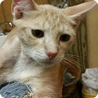 Adopt A Pet :: Jonas - Morganton, NC