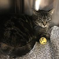 Adopt A Pet :: Tito - Greensburg, PA