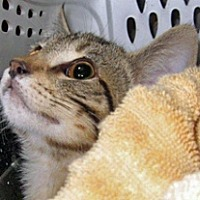 Adopt A Pet :: 361873 - Wildomar, CA