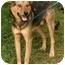 Photo 2 - Shepherd (Unknown Type)/Terrier (Unknown Type, Medium) Mix Dog for adoption in Millstone, New Jersey - Shep