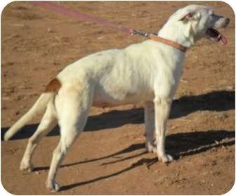Spitz (Unknown Type, Medium) Mix Dog for adoption in Anton, Texas - Squirt