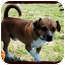 Photo 2 - Beagle Mix Dog for adoption in Windham, New Hampshire - Balto