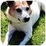 Photo 1 - Jack Russell Terrier Dog for adoption in Omaha, Nebraska - Benny