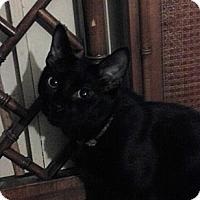 Adopt A Pet :: Zipper - Cranford/Rartian, NJ