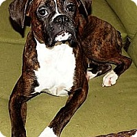 Adopt A Pet :: Diamond - Wasilla, AK