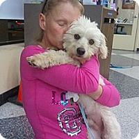 Adopt A Pet :: Polo - Encinitas, CA