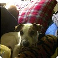 Adopt A Pet :: Cora in Houston - Houston, TX
