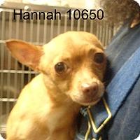 Adopt A Pet :: Hannah - Greencastle, NC