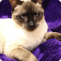 Adopt A Pet :: Fallon - Foothill Ranch, CA