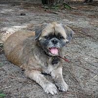Adopt A Pet :: Penny - Malabar, FL