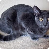Adopt A Pet :: Anna - Prescott, AZ