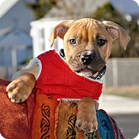 Adopt A Pet :: Wallace - Reisterstown, MD