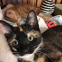 Adopt A Pet :: Beatrix - Long Beach, CA