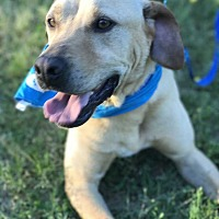 Adopt A Pet :: Tanner - E. Greenwhich, RI