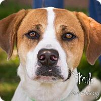 Adopt A Pet :: Milo - Cheyenne, WY