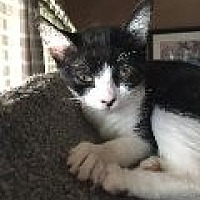 Adopt A Pet :: Ellen - La Canada Flintridge, CA