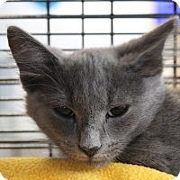 Adopt A Pet :: Caleb - Sarasota, FL