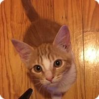 Adopt A Pet :: Sunshine - Oakhurst, NJ