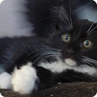 Adopt A Pet :: Moonpie - Manning, SC