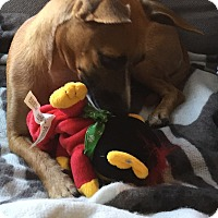 Adopt A Pet :: Taffy - Santa Ana, CA