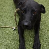 Adopt A Pet :: Lucinda - Farmington, NM