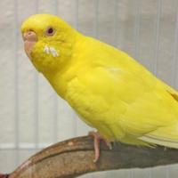 Adopt A Pet :: Tweet - Harrisonburg, VA