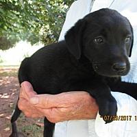 Adopt A Pet :: BREEZY - Williston Park, NY