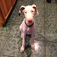 Adopt A Pet :: Skylar - Groveland, FL