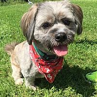 Adopt A Pet :: Muppet - Detroit, MI