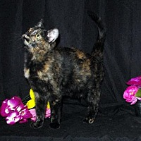 Adopt A Pet :: Lany - Fayetteville, GA