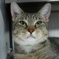 Adopt A Pet :: Olive - St. Petersburg, FL