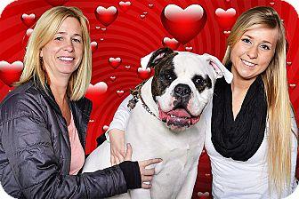 American Bulldog Mix Puppy for adoption in Livonia, Michigan - Gunnar - Adopted 02/08/2014