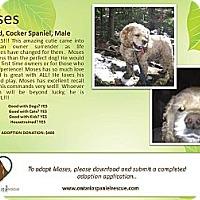 Adopt A Pet :: Moses - Ottawa, ON
