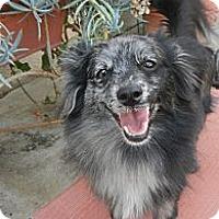 Adopt A Pet :: River - Escondido, CA