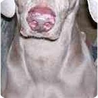 Adopt A Pet :: Spike - Eustis, FL