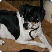 Adopt A Pet :: Diamond - E Windsor, CT
